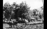 ¿Sabías que en 1930 se celebró el primer Día del Campesino?