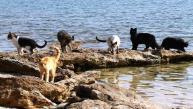 Disfruta de la playa donde los gatos son los reyes