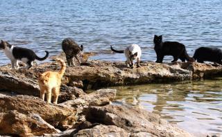 Disfruta de la playa italiana en la que los gatos son los reyes