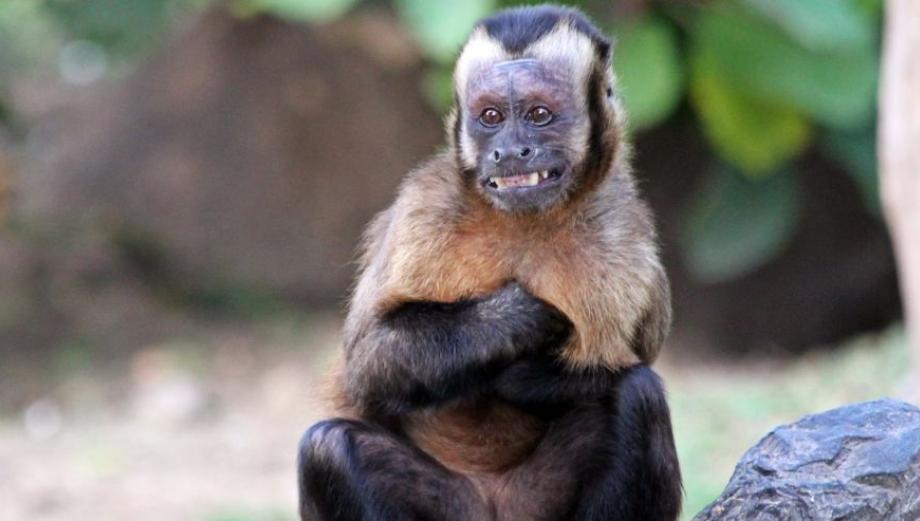 Parque de Las Leyendas: algunos animales de la zona selva