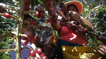 Día del campesino: los principales productos de nuestra tierra