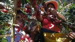 Día del campesino: los principales productos de nuestra tierra - Noticias de departamento de cajamarca