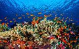 Dos mil científicos piden a Australia proteger los arrecifes