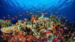 Dos mil científicos piden a Australia proteger los arrecifes - Noticias de james cook