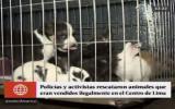 Cercado: activistas y PNP rescatan animales de tiendas ilegales