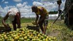 ONU pide a países investigar más la contaminación de alimentos - Noticias de e.coli