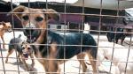 PETA: Los albergues son el último recurso - Noticias de albergue canino