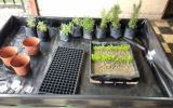 Los biohuertos también se pueden armar en espacios pequeños