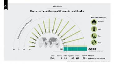 Infografía: hectáreas de cultivo genéticamente modificadas