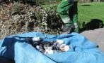 Arequipa: investigan muerte de palomas en Plaza de Armas