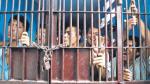 Al menos seis fugas en penales del país durante este gobierno - Noticias de reforma penitenciaria