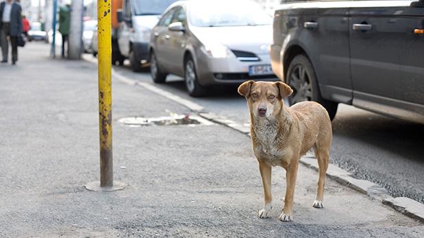 [Foto] No más perros callejeros en Holanda