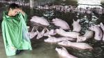 China: Impresionantes imágenes de las fuertes inundaciones - Noticias de jiangsu