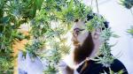 Uruguay: ¿Por qué las farmacias se niegan a vender marihuana? - Noticias de legalizacion de marihuana