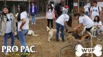 Pro Pac cumple con albergues aliados a WUF - Noticias de albergues para perros