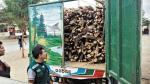 Más de 95 mil árboles fueron extraídos ilegalmente el 2015 - Noticias de tala