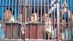 Editorial: Penales coladera - Noticias de lewis carroll