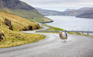 Una oveja te muestra las maravillas de las Islas Feroe