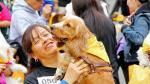 Hoy Perú celebra el Día del Perro - Noticias de albergue canino