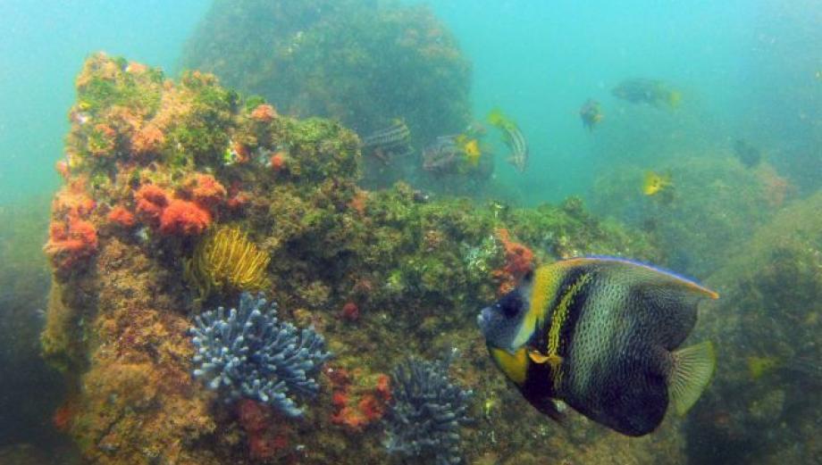 Mar Pacífico Tropical: ocho razones para creación de la reserva