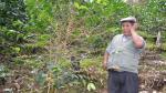 La coca ilegal le sigue ganando al café orgánico de Sandia - Noticias de juan pablo mamani