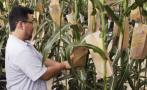 Transgénicos: la UE aprueba uso de soya de Monsanto y Bayer