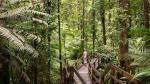 Paraísos verdes: Los 7 más impresionantes en el mundo - Noticias de tambopata