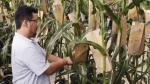 Transgénicos: la UE aprueba uso de soya de Monsanto y Bayer - Noticias de alimentos transgenicos