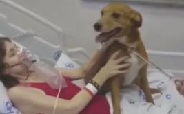 Tenía cáncer terminal y pidió despedirse de su perro [VIDEO]