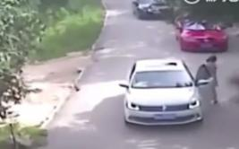 El escalofriante ataque de un tigre en safari de China