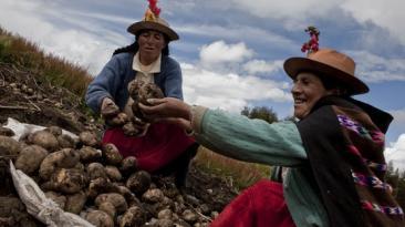 Gastronomía peruana y los retos para el nuevo gobierno