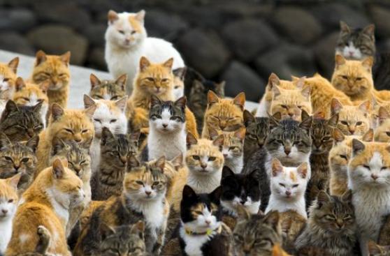 ¿Por qué son tan egoístas los gatos?