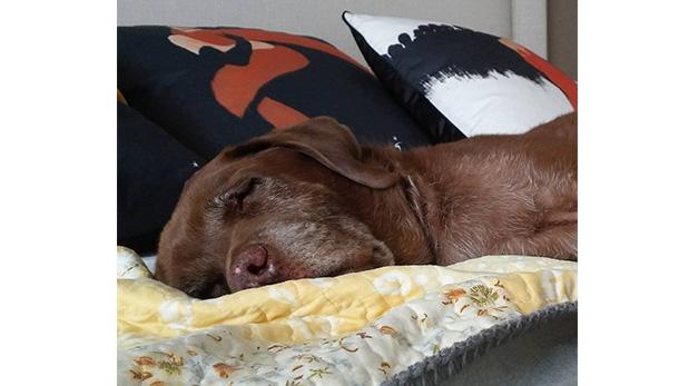 [Foto] ¿Cómo combatir el cáncer en mascotas?