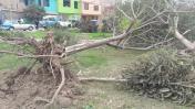 SMP: talaron 10 árboles de parque para lotizarlo [FOTOS]