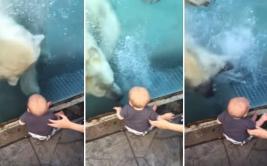 Oso polar intentó atacar a un niño en un zoológico [VIDEO]