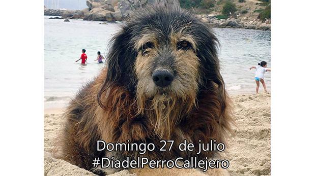 Esta fotografía fue publicada en el 2014 en el muro de Facebook del ciudadano chileno Ignacio Gac, impulsor del Día del perro callejero.