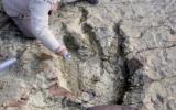 ¿Cómo es la inmensa huella de dinosaurio hallada en Bolivia?