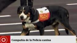 Parada Militar: mascota de PPK lideró desfile de policía canina