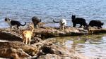 Siete destinos en los que los gatos son los reyes - Noticias de la parada