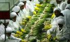 Adex: Preocupa desaceleración de las agroexportaciones