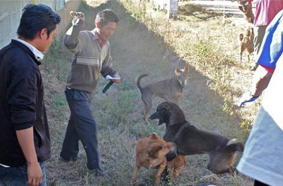 Qué hacer en una pelea de perros