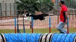 Así se lucieron en campeonato nacional de 'agility' - Noticias de campus villa