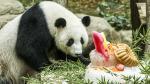 Pandas del zoológico de Malasia celebran su décimo cumpleaños - Noticias de torturas