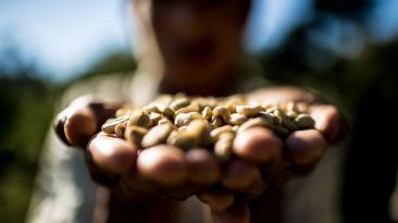 Cómo obtener una buena taza de café sin salir de casa (FOTOS)