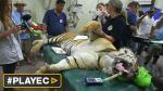 Rescatan a los últimos animales del zoológico de Gaza [VIDEO] - Noticias de ¡esto es guerra!