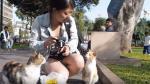 ¿Qué pasa cuándo los turistas ven gatos en Parque Kennedy? - Noticias de miraflores