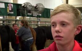 YouTube: Niño es aplastado por vacas y arruina entrevista de TV