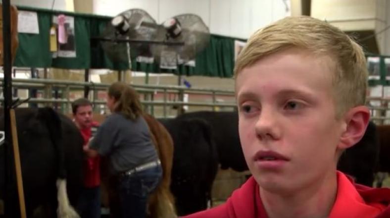 YouTube: niño es aplastado por dos vacas y estropea entrevista
