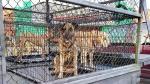 Crisis de espacio en Luisiana para animales - Noticias de lluvias intensas