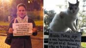Activistas denuncian que los gatos de Miraflores corren peligro